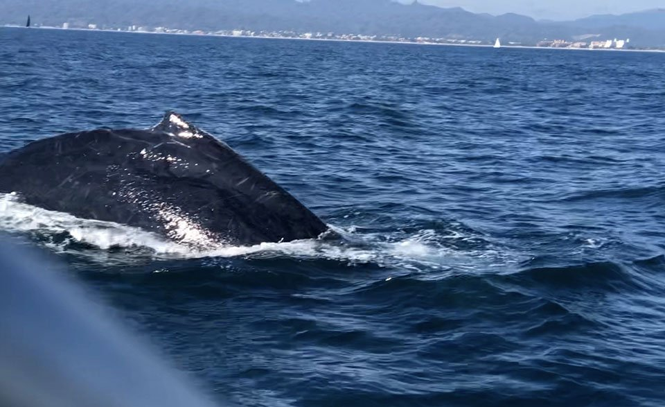 Humpback Whale close to Due West