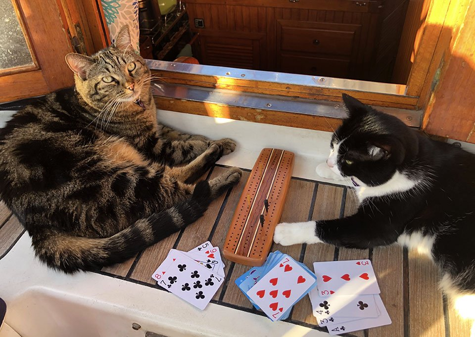 Tosh & Tikka playing cribbage.